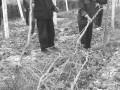 """紫地球""""种了33亩田,种了两年不能结果"""
