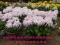 常见木本花卉识别及栽培要点