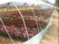 初级花卉园艺工1-2露地观赏类植物的育苗及栽培方法 (292播放)