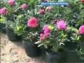 初级花卉园艺工2-1肥料知识介绍 (261播放)