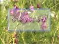 初级花卉园艺工2-2花卉的多种繁殖方法 (265播放)