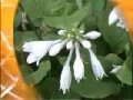 初级花卉园艺工2-3花卉对温度及光照的要求 (258播放)