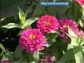初级花卉园艺工2-4花境的建植 (257播放)