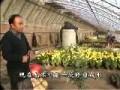 初级花卉园艺工3-3盆栽植物的修剪 (322播放)