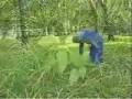 初级花卉园艺工4-1草坪的栽培及养护 (267播放)
