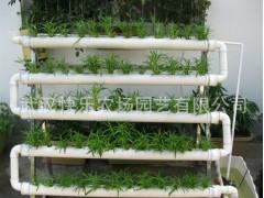 蔬菜 阳台/阳台屋顶农业设备阳台种菜设备设施有机蔬菜家里种乐栽乐哉