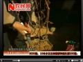葡萄冬季修剪2010.11.08(河北电视台视频,农博士网) (565播放)