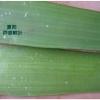 芦荟鲜叶凝胶  芦荟的吃法   芦荟纯天然护肤品