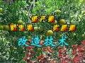 三果嫁接改造技术 (1058播放)